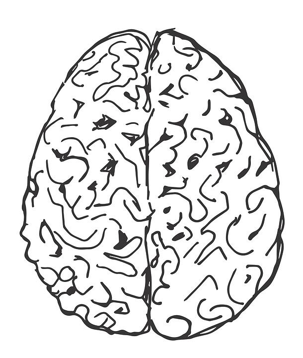 Органоиды мозга неявляются функциональным органом, но позволяют тестировать воздействие лекарств намозг.