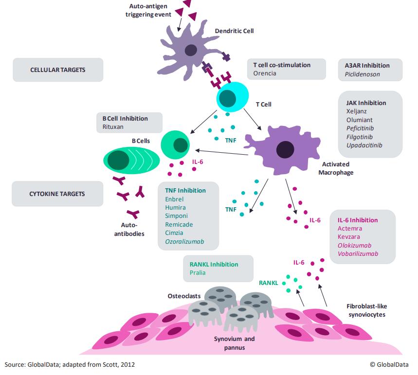 Рис. 6. Сеть взаимодействий между клетками иммунной системы, сустава ицитокинами при ревматоидном артрите. Всерых прямоугольниках— лекарства, которые воздействуют наэти элементы. Курсивом выделены те препараты, которые ещё невышли нарынок. Видно, что новые разработки воздействуют нате же элементы патогенеза, что иимеющиеся лекарства