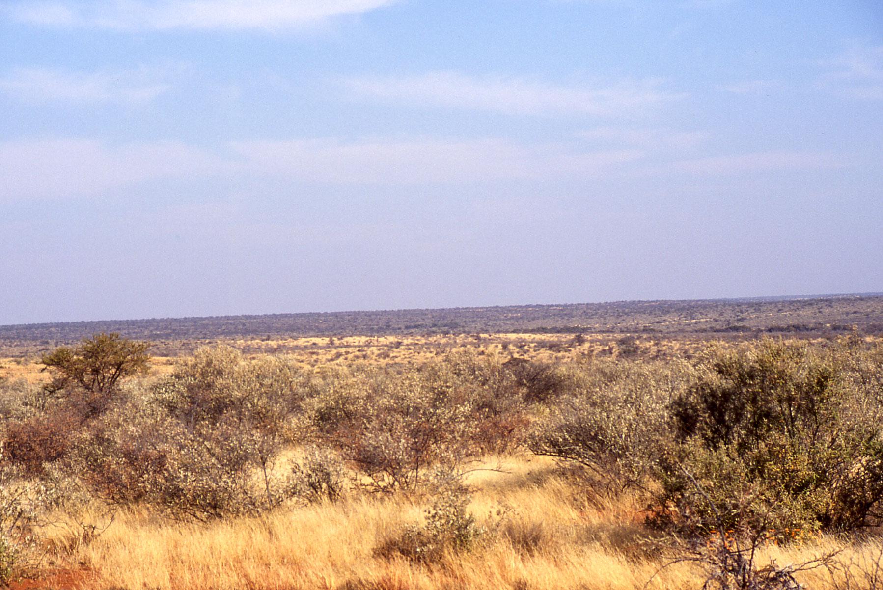 Масштабное лесонасаждение вАфрике— угроза ценным экосистемам