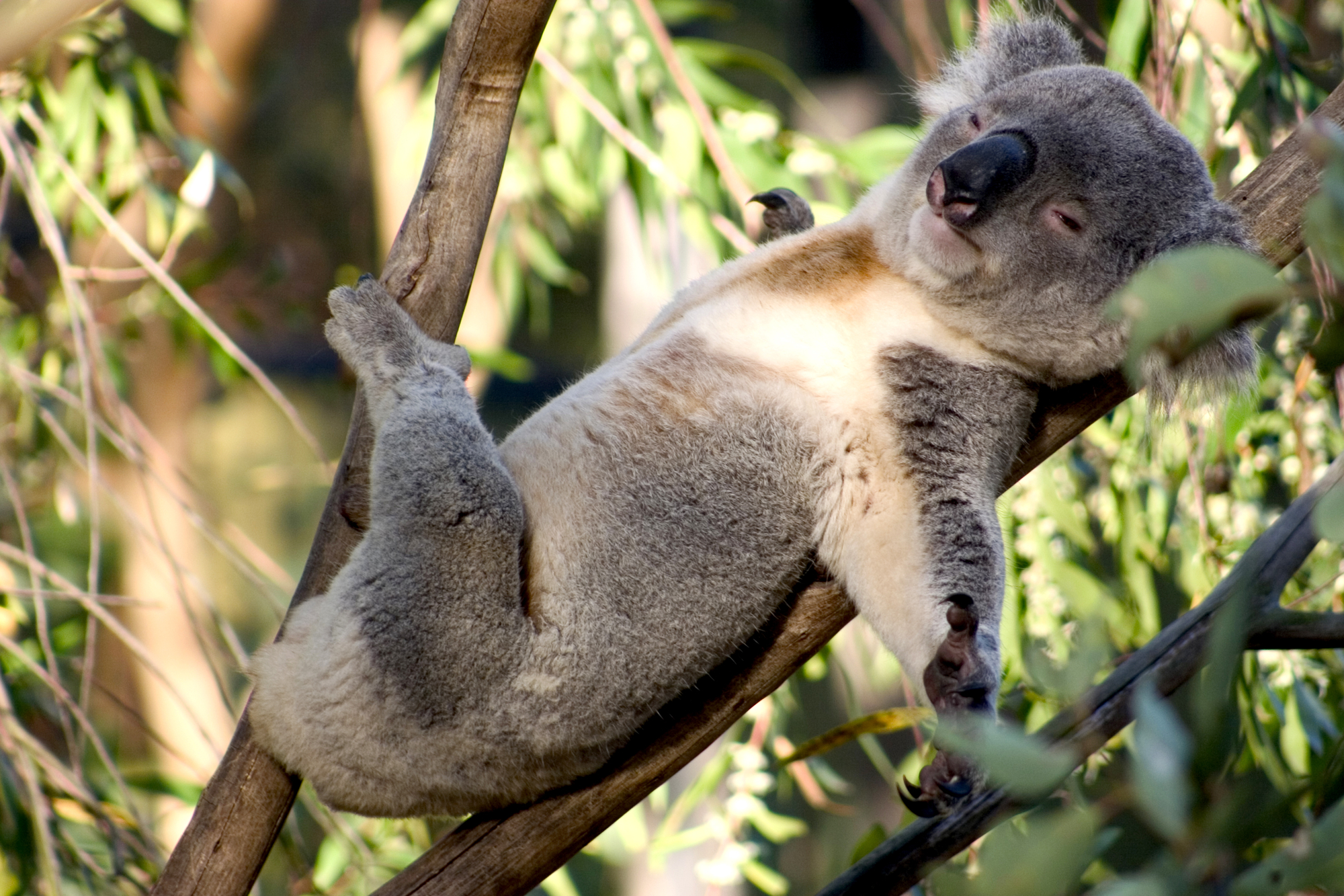 Удивительные австралийские животные помогают учёным понять эволюционные процессы.