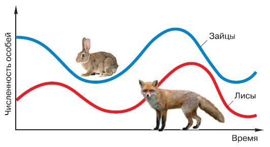 Самоподдерживающиеся колебания (автоколебания) численности популяций впростейшей системе «хищник-жертва».