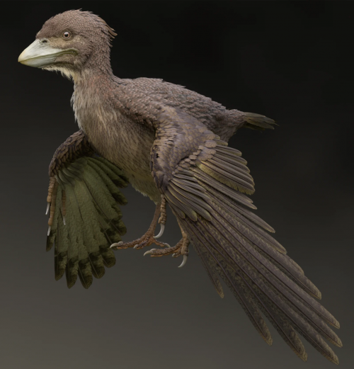 Художественное представление Fukuipteryx prima.
