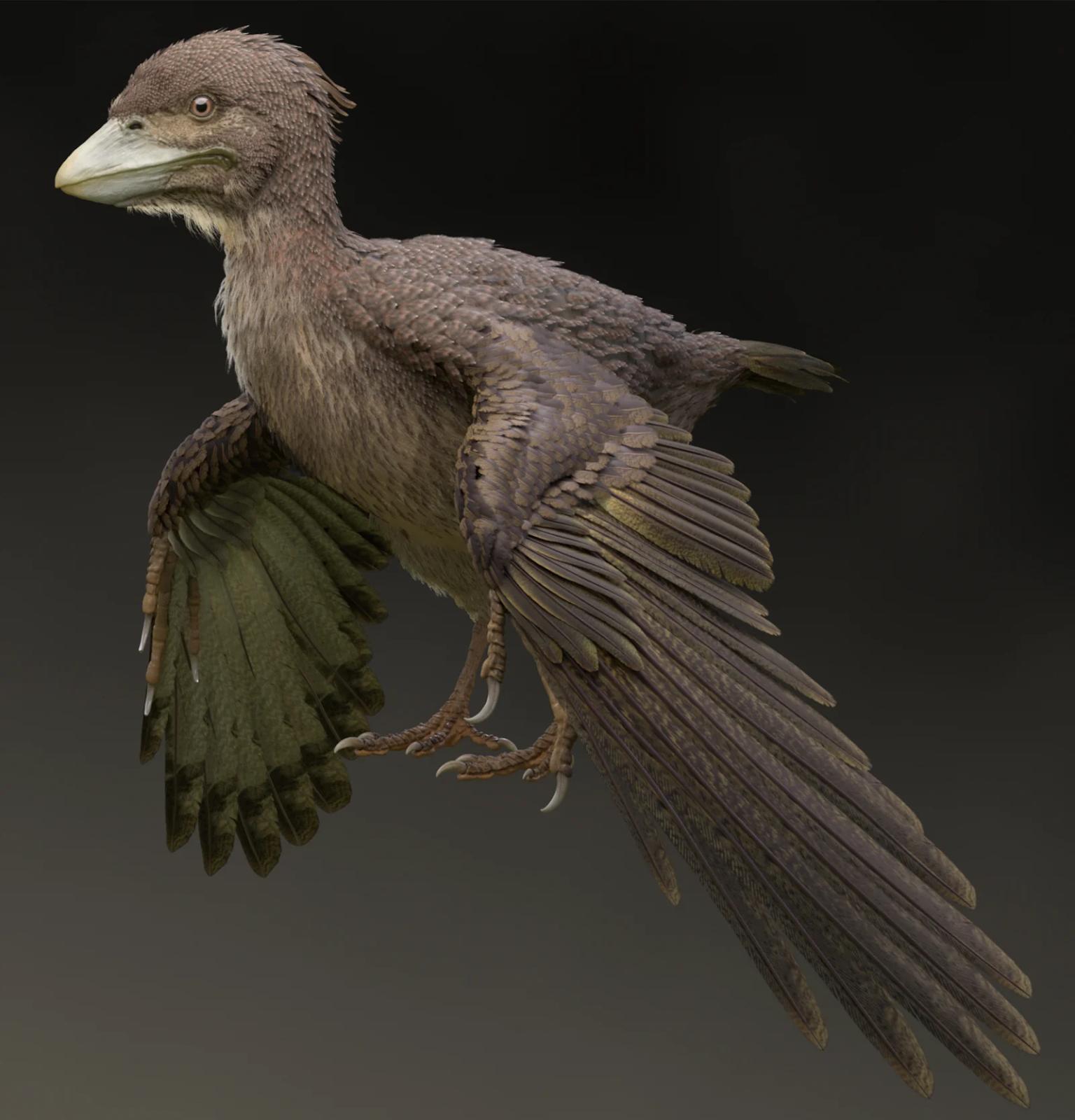 Художественное представление Fukuipteryx prima. Автор— Масанори Ёсида (Masanori Yoshida)