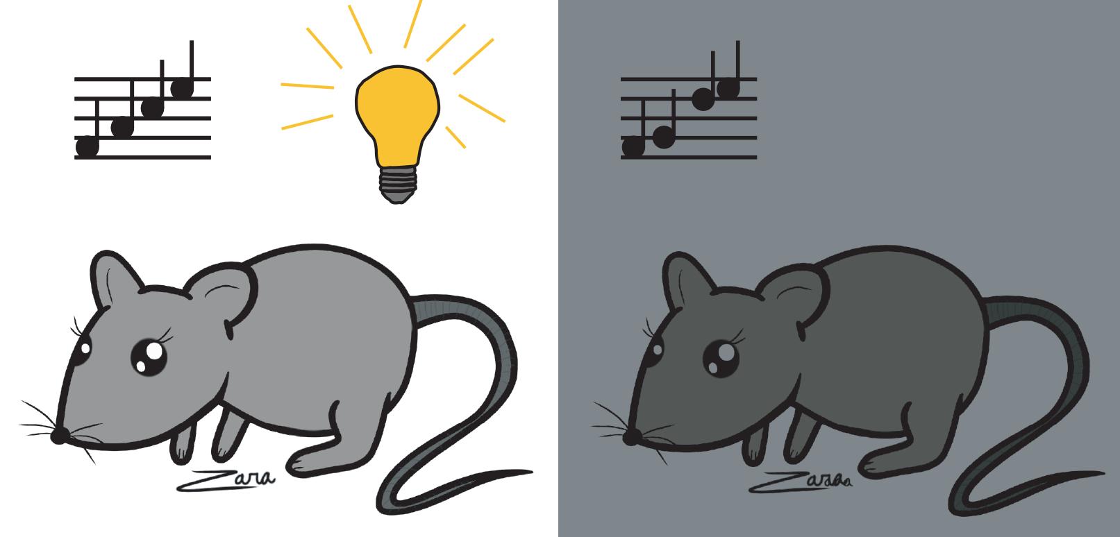 Втемноте мыши стали лучше слышать.