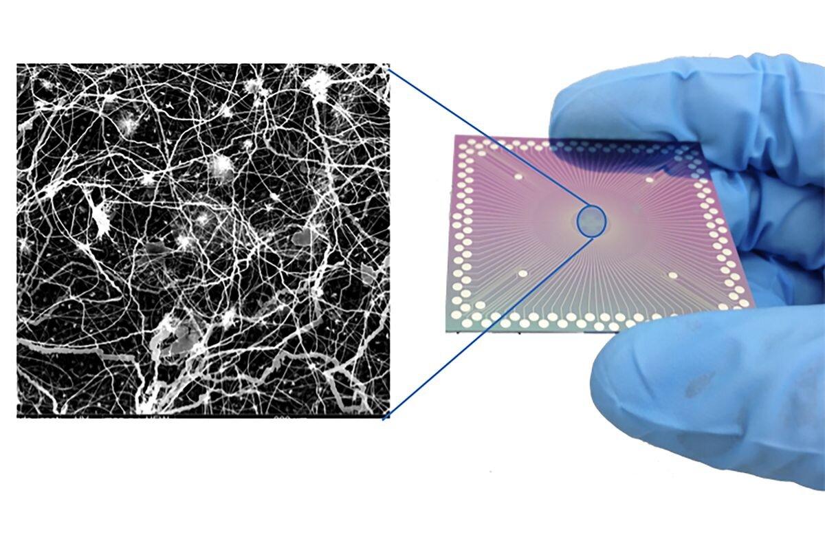 Устройство, подобное тому, что применялось висследовании (справа), инейроноподобное расположение нанопроволок устройства, вид вэлектронный микроскоп (слева).