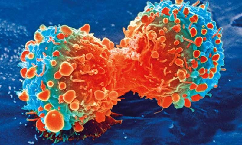 Раковая клетка впроцессе деления.