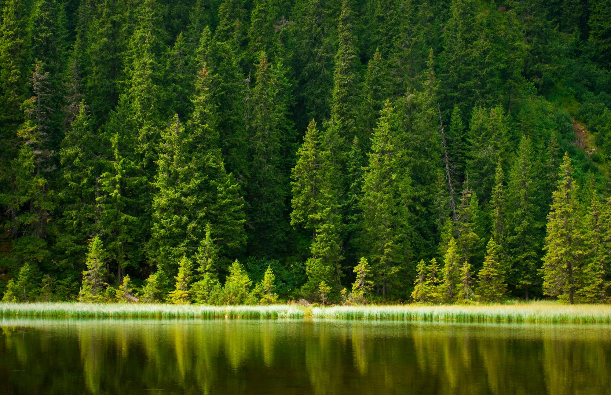 Российские леса впрохладном климате при всех возможных сценариях антропогенных воздействий вXXI веке будут вцелом поглощать углерод из атмосферы