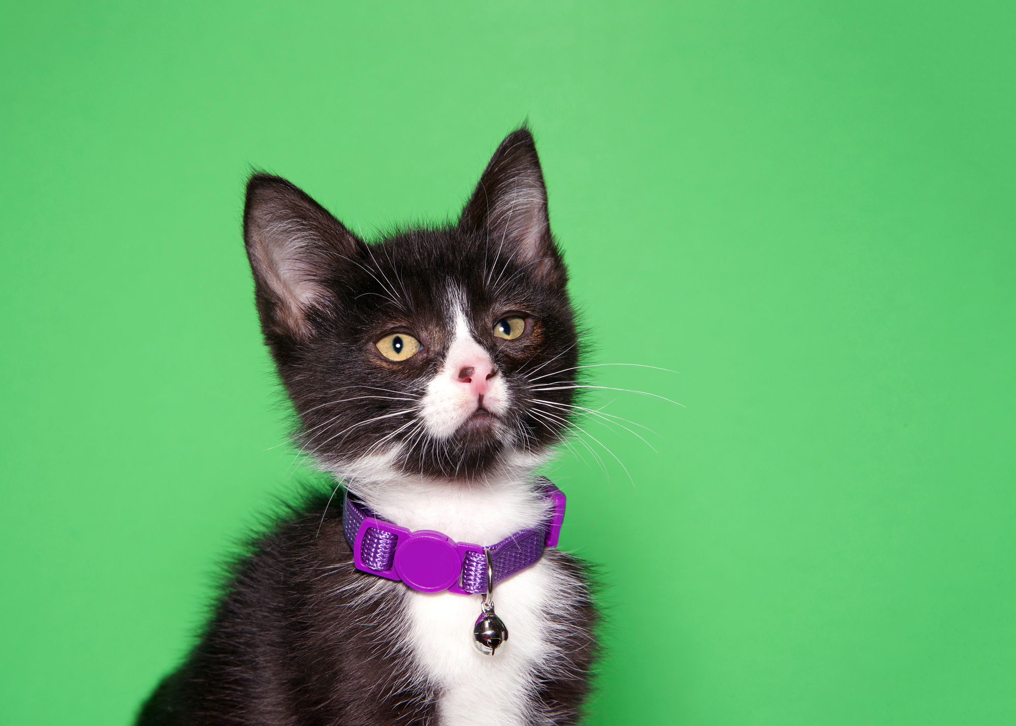 Вам следует взвесить все плюсы иминусы, прежде чем прикреплять колокольчик кошейнику своей кошки.