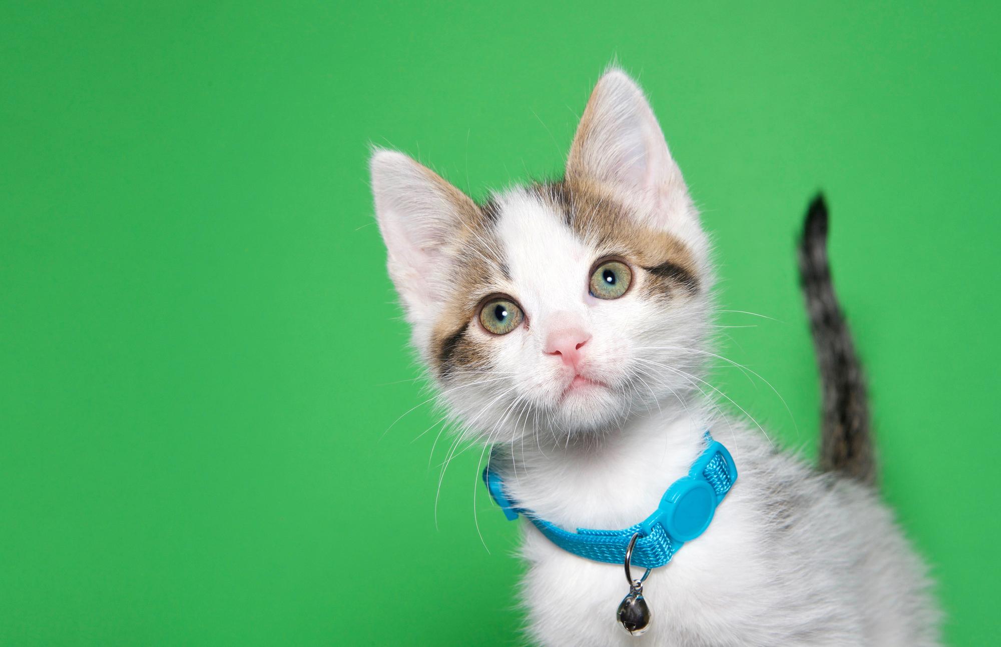 Котёнок сколокольчиком