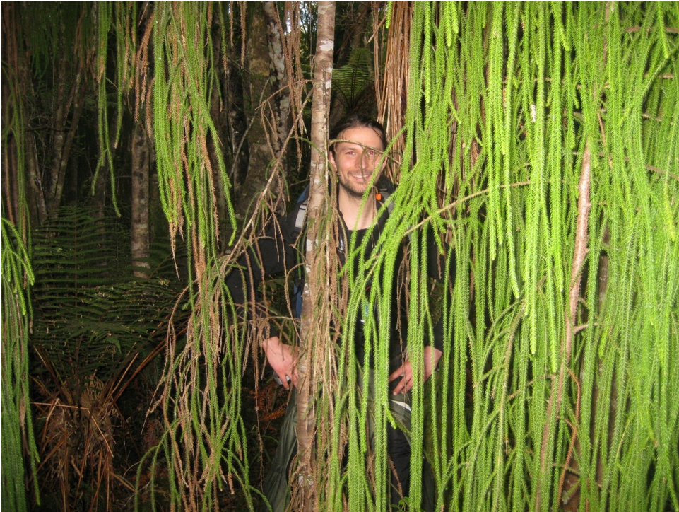 Кайл Розенблад позирует со зрелым дакридиумом кипарисовым (Dacrydium cupressinum) наострове Стюарт вНовой Зеландии. Изображение Патрика Берера (Patrick Behrer).