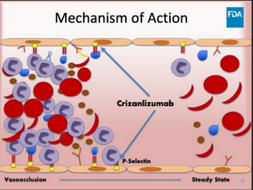 Рис. 1. Механизм действия crizanlizumab. Источник— FDA