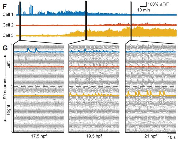 Рис. 6. Пример регистрации активности отдельных нейронов
