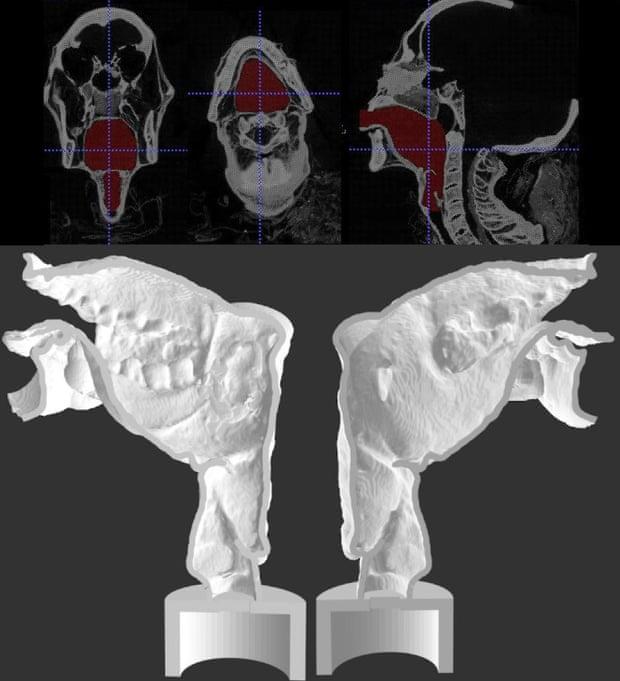 Сечение 3D-печатной копии части голосовых путей мумии, хранящейся вГородском музее Лидса