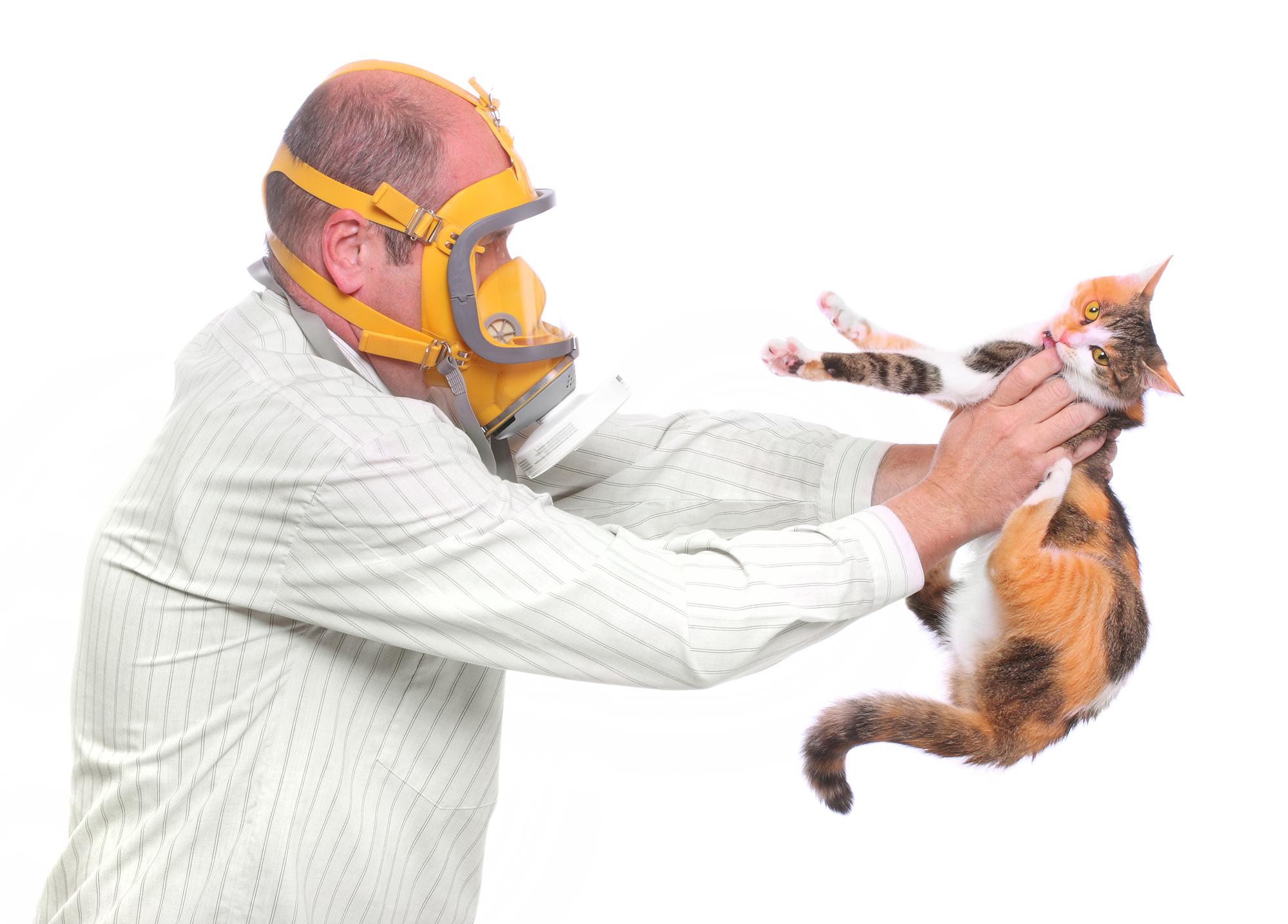 Аллергия— одна из основных причин, по которым хозяева кошек отказываются от своих питомцев.