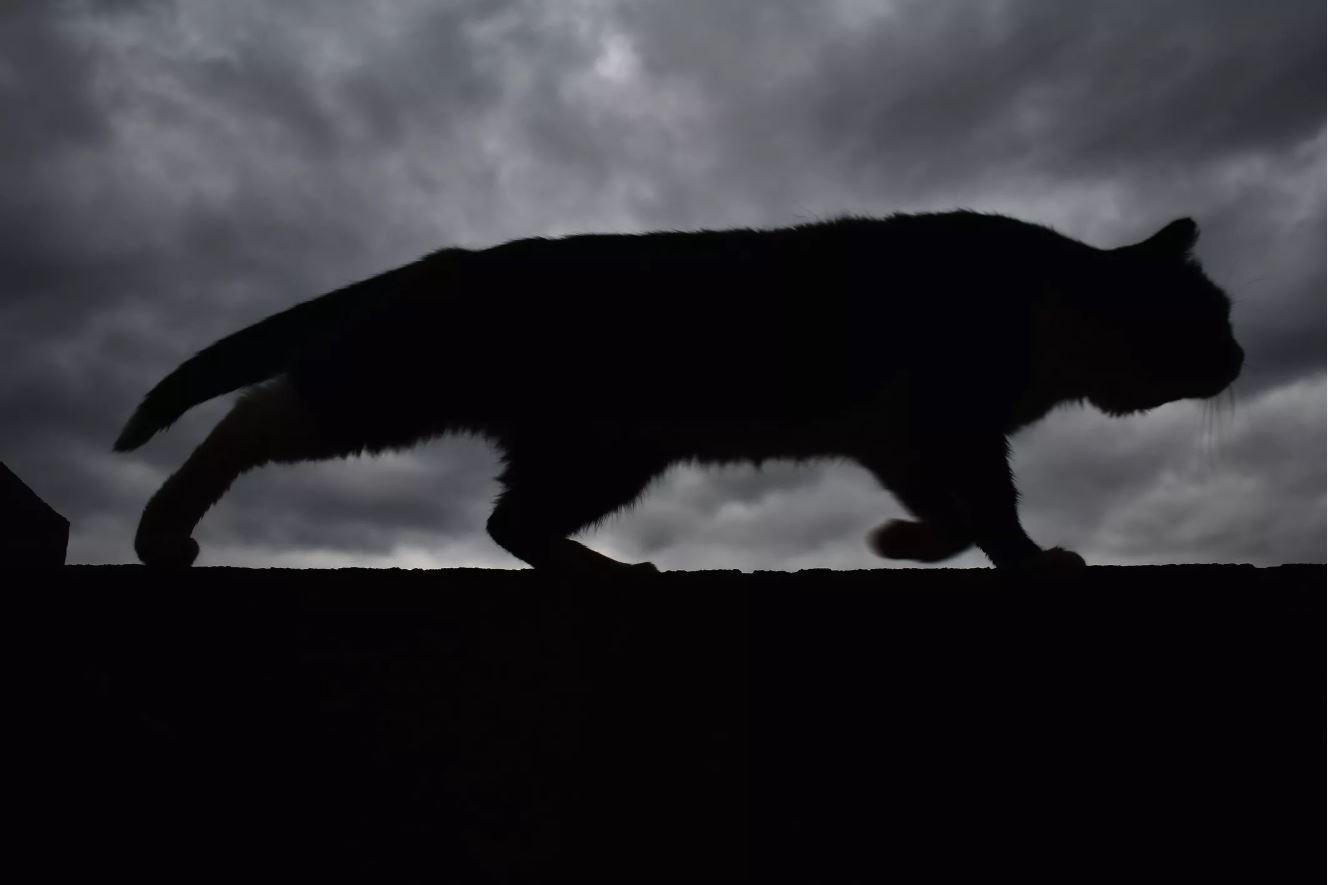 Кошки-трупоеды инепростая работа учёных-криминалистов