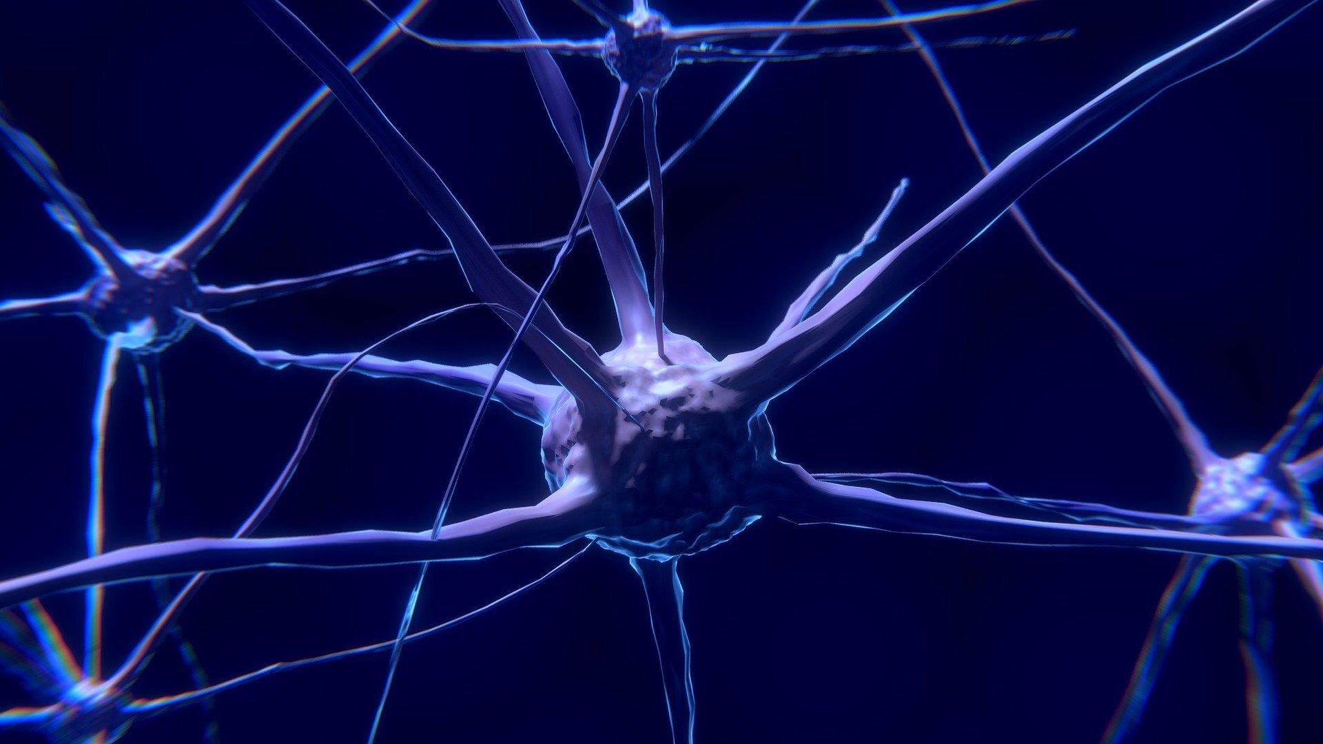Учёные, предположительно, обнаружили «мотор» сознания.