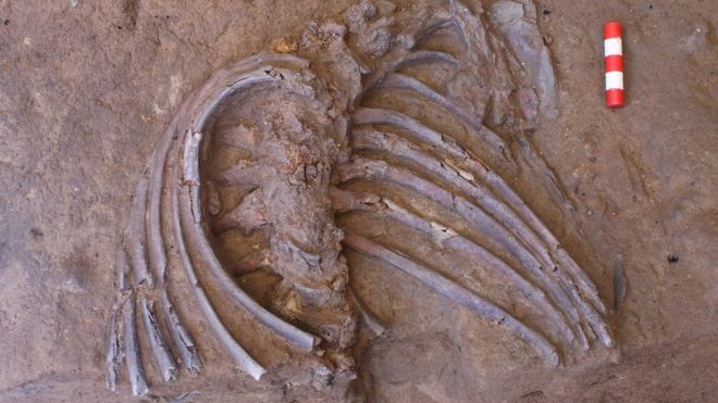 Шанидар Z: спящий неандерталец, которого незаметили