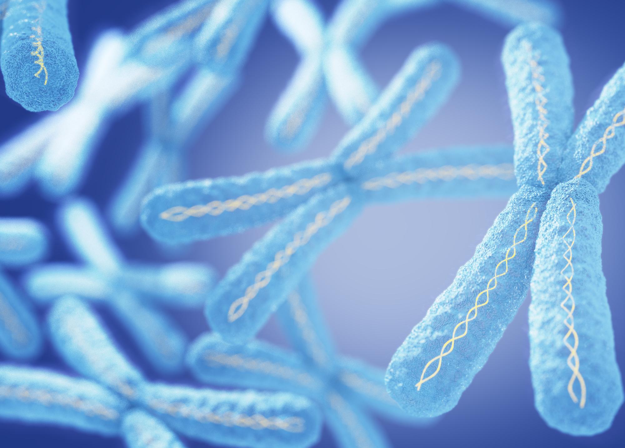 """Вхромосомах вочень плотном виде упакована молекула <abbr lang=""""ru"""" title=""""Дезоксирибонуклеиновая кислота"""">ДНК</abbr>."""