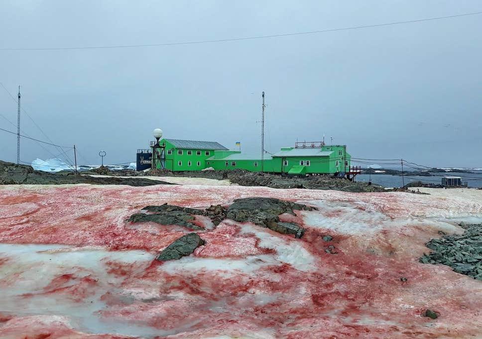 Кроваво-красный снег вАнтарктиде— это дело рук… водорослей