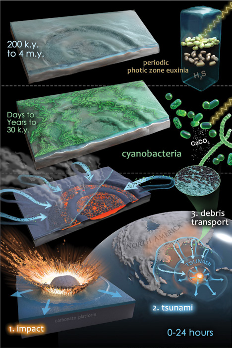 Chicxulub microbial community evolution