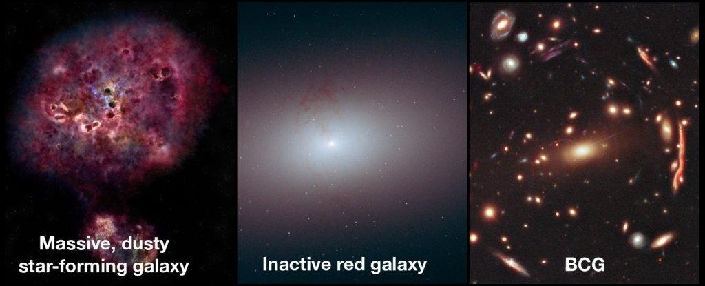 Предположительные стадии эволюции ранней сверхмассивной галактики: массивная галактика синтенсивным образованием звёзд иобилием межзвёздной пыли, неактивная красная галактика и«ярчайшая галактика скопления» (Brightest cluster galaxy, BCG). By: <i>NRAO/AUI/NSF/B. Saxton; NASA/ESA/R. Foley; NASA/StScI</i>.