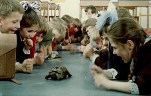 Черепаха всоветском школьном живом уголке. Кадр из фильма Ролана Быкова «Внимание, черепаха!» (1969)
