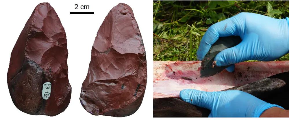 Орудие микок из Чагырской пещеры (слева). Справа— разделка мяса экспериментально изготовленным микокским бифасом