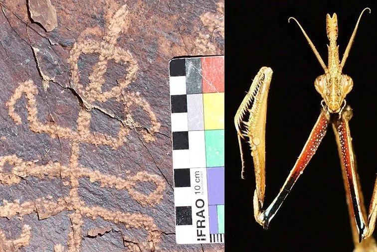 Тот самый загадочный петроглиф всравнении сживым богомолом. Похож?