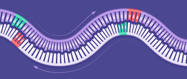 При репликации генома нарнавирусов «обратная комплементарность»— считывание цепочки комплементарных нуклеотидов вобратном порядке— представлена наряду спрямой. / Люси Ридинг-Икканда (Lucy Reading-Ikkanda) / Журнал <i>Quanta</i>.<br />