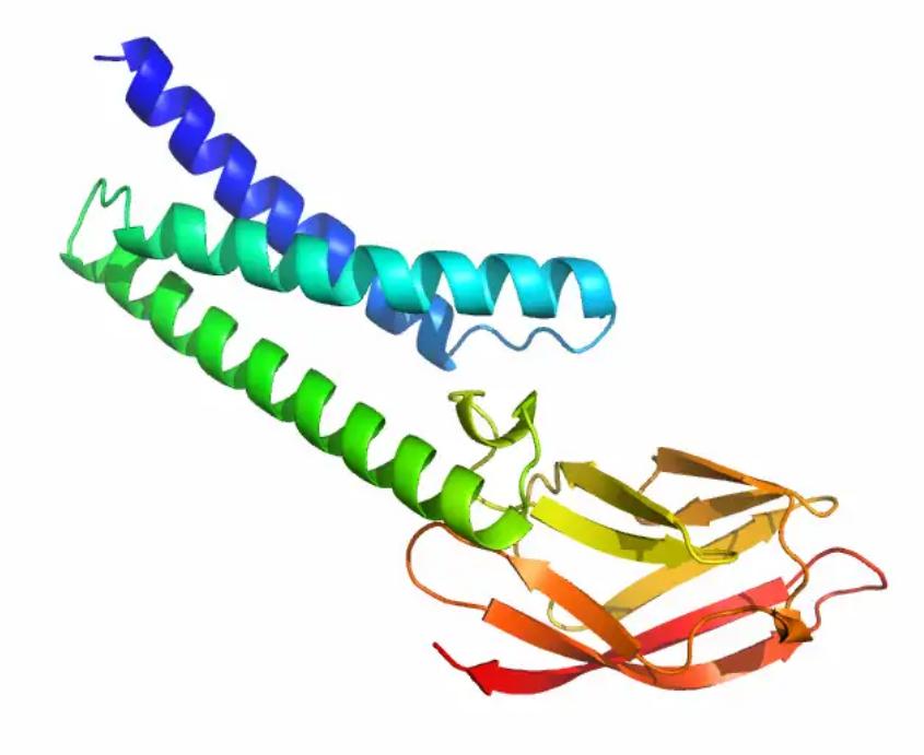 Мембранный белок вируса.