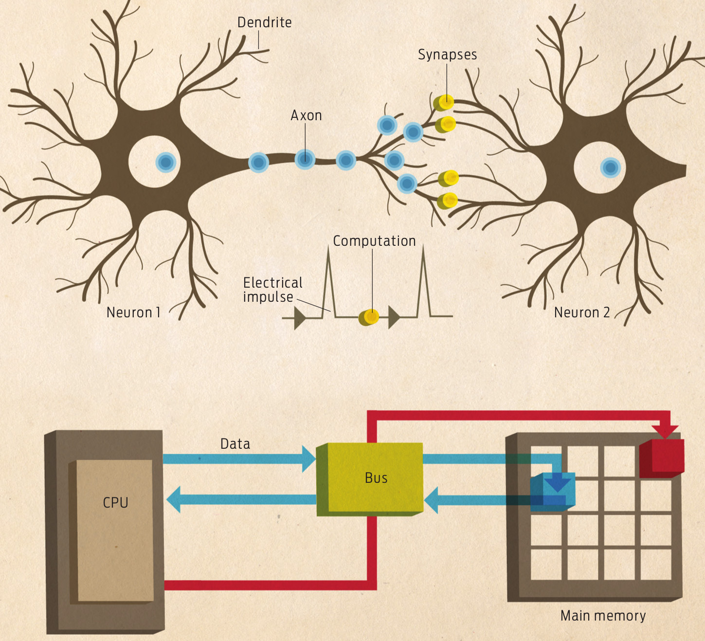 computer and neural system architecture