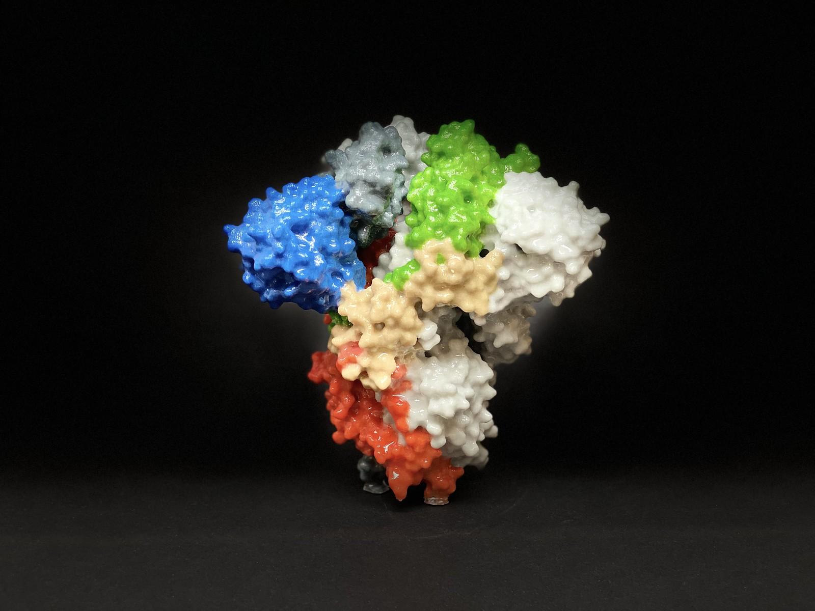 "Шиповидный белок коронавируса SARS-CoV-2. Пластиковая модель. Фото: <a href=""https://www.nih.gov/"" rel=""noopener"" target=""_blank"">NIH</a>."