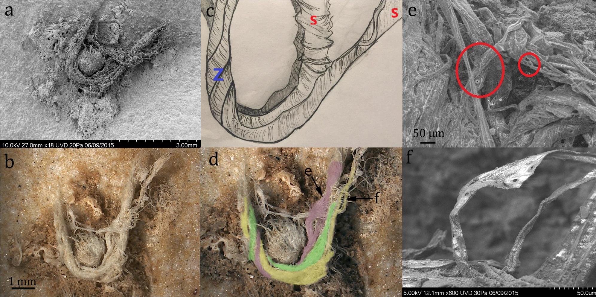 Найденный фрагмент верёвки (сканирующая электронная микроскопия) под разным увеличением иего реконструкция