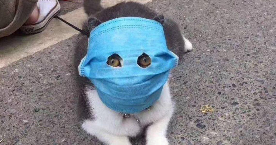 Котик накарантине
