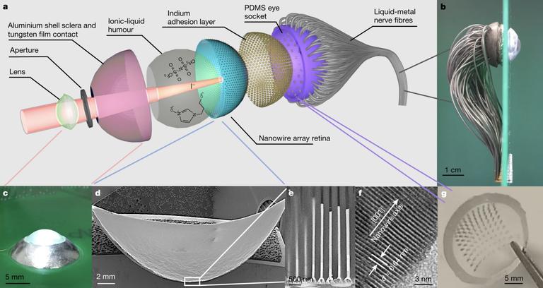 Ещё один шаг ксовершенному бионическому глазу