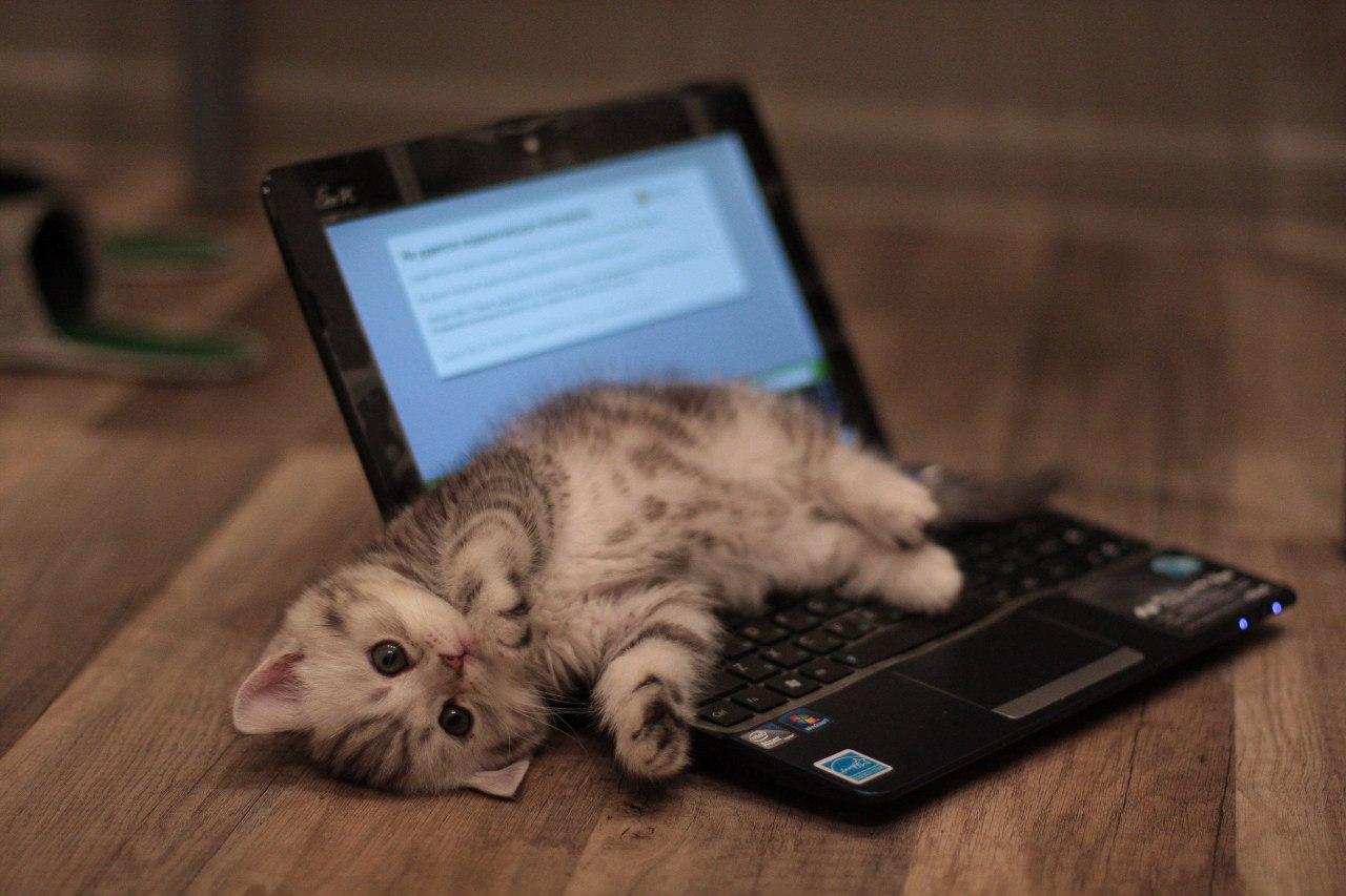 Котам ненужны цифровые навыки. Анам нужны, втом числе для просмотра фото котов.