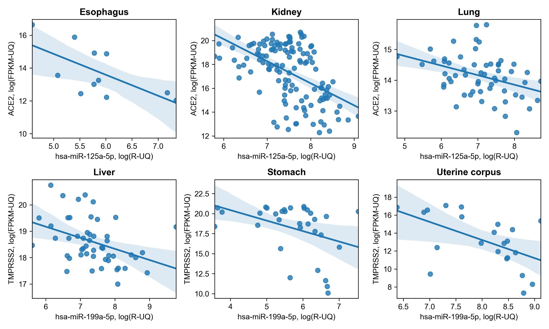 Некоторые из найденных взаимодействий. Чётко прослеживается обратная зависимость экспрессии ACE2 иTMPRSS2 от экспрессии молекул микроРНК.