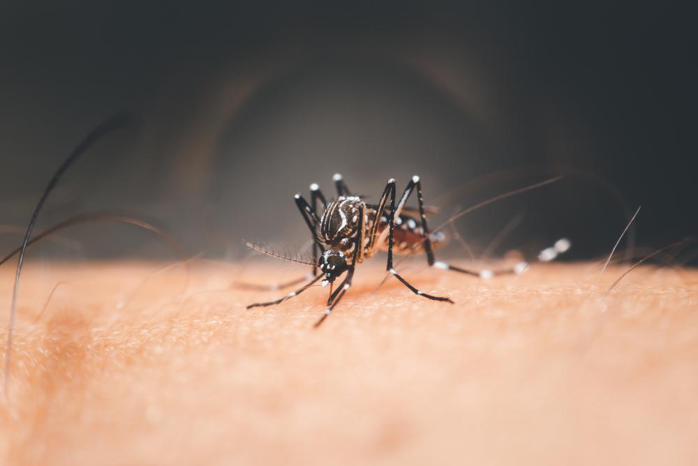 Если бы эта комариха родилась самцом, она непила бы ничью кровь.