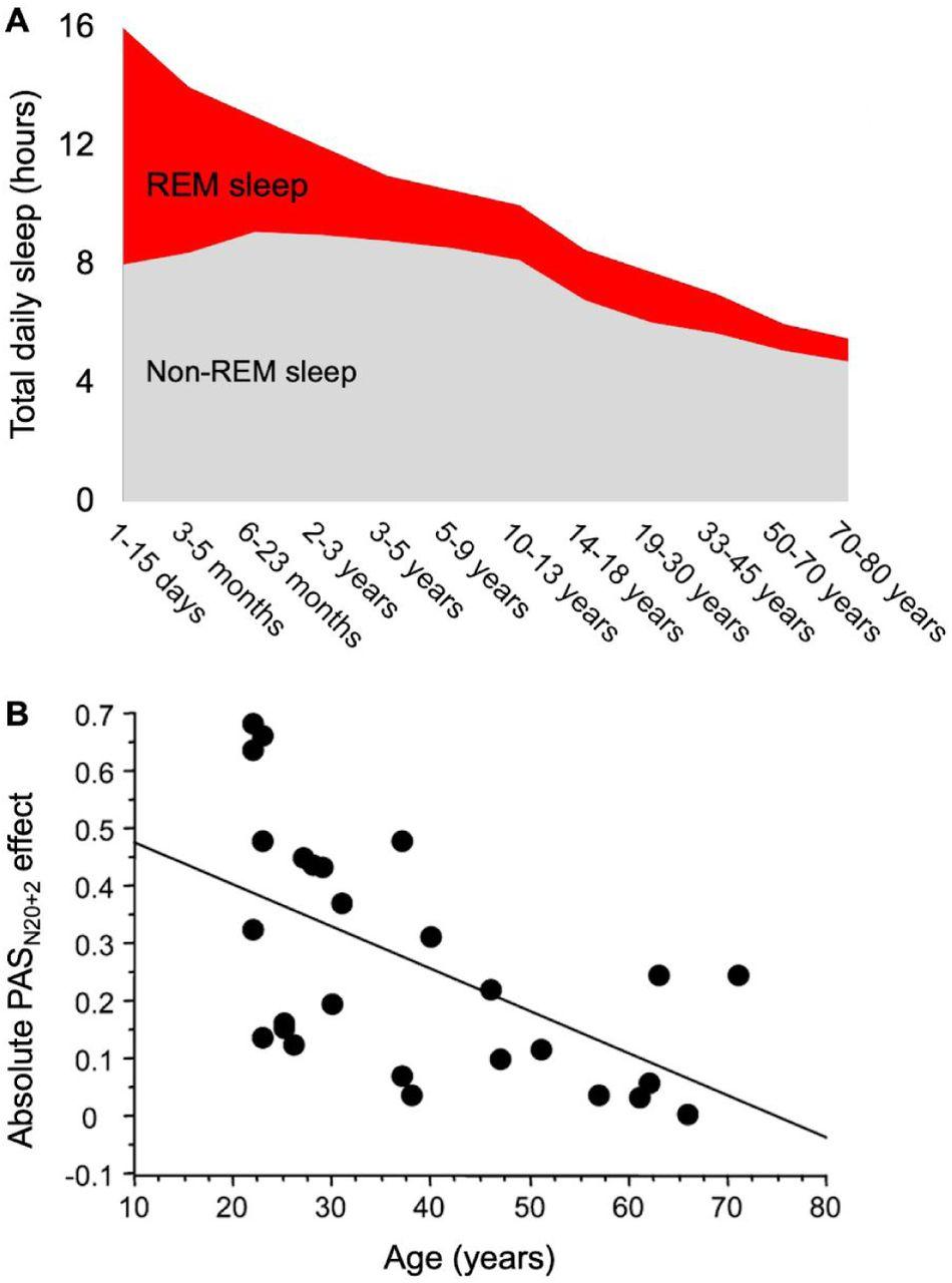 Снижение БДГ-сна свозрастом совпадает суменьшением пластичности.