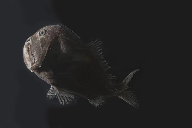 Очень чёрная рыба