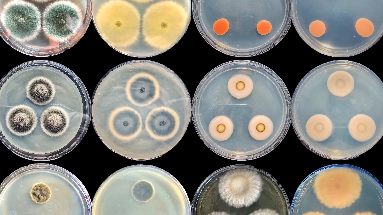 Вэтих чашках Петри растут разнообразные морские грибы, извлечённые из донных отложений Мексиканского залива.<br />Эмма Килер (Emma Keeler), кафедра геологии игеофизики Океанографического института Вудс-Хоула (Woods Hole Oceanographic Institution).<br />