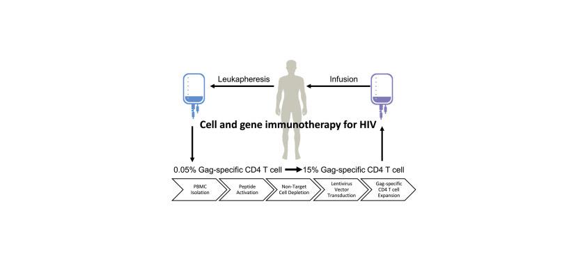 Графическое представление схемы леения ВИЧ AGT103-T.