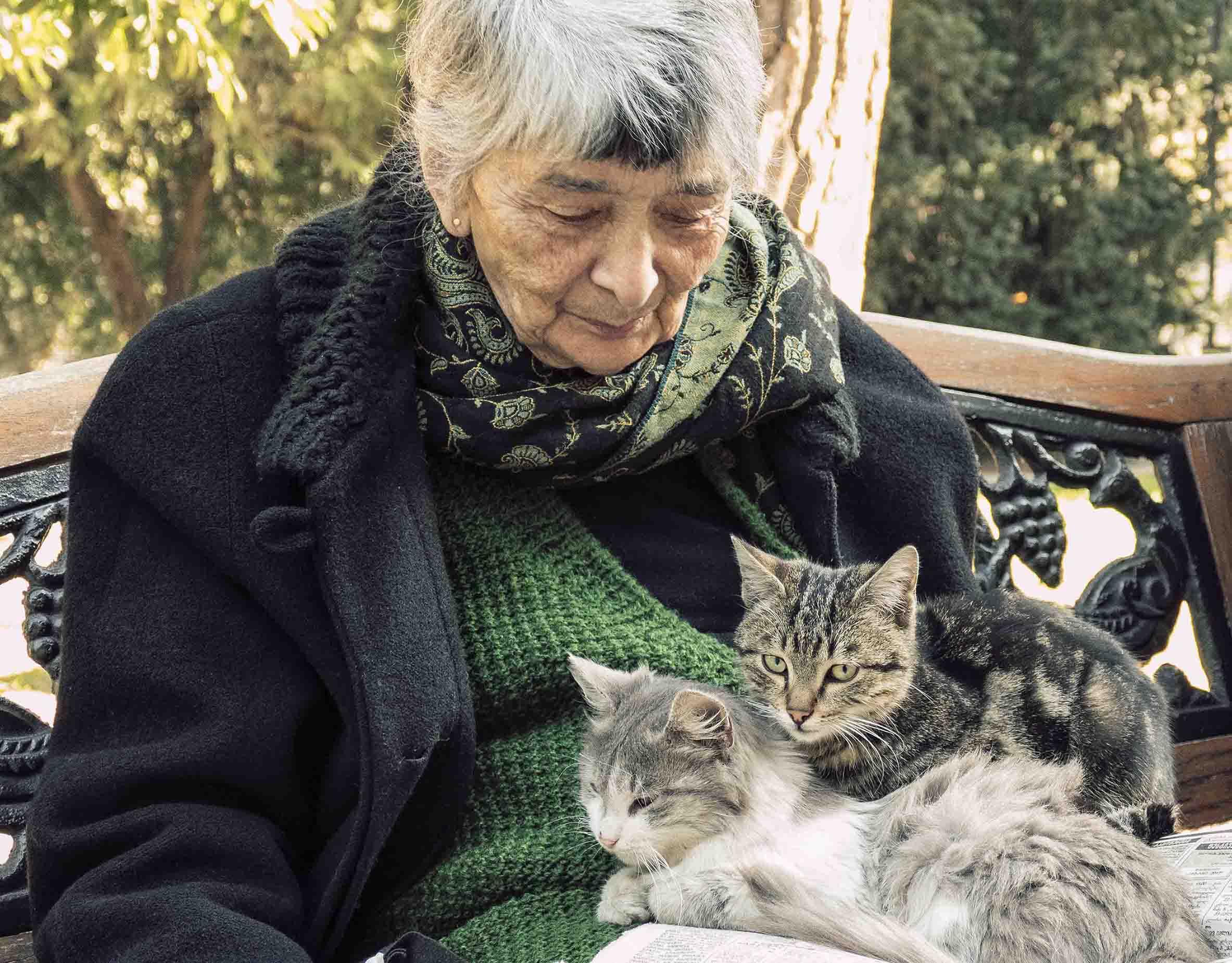 GC376— одно лекарство для кошек илюдей (возможно).