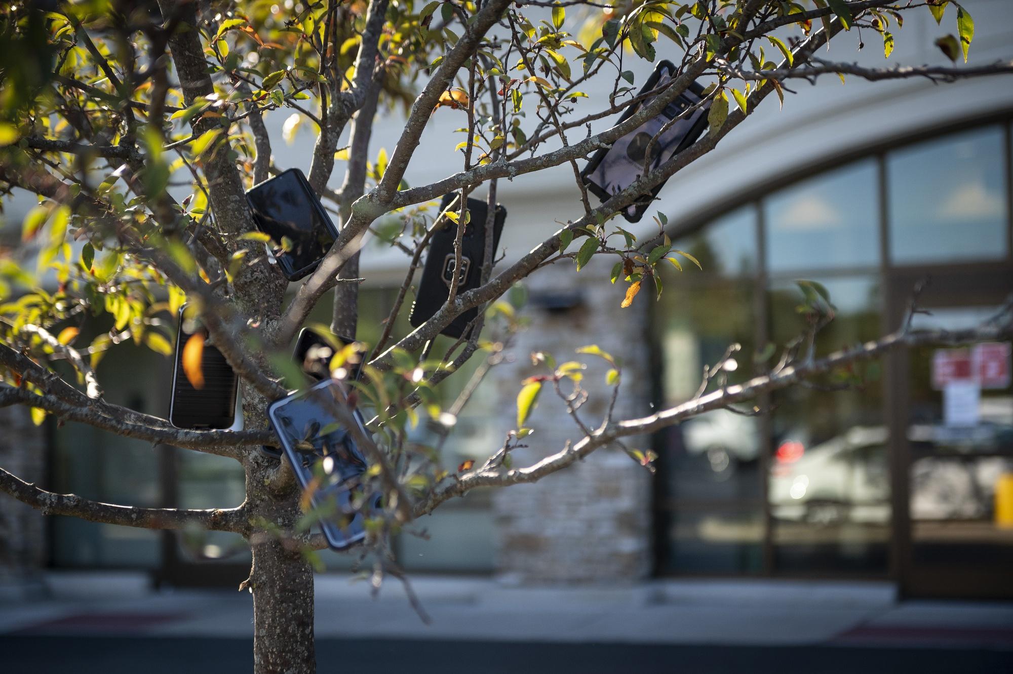 Смартфоны надеревьях— новое явление для пригородов Чикаго
