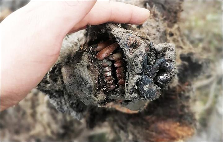 Уникальная находка— прекрасно сохранившийся древний медведь возрастом, вероятно, до 39000 лет.