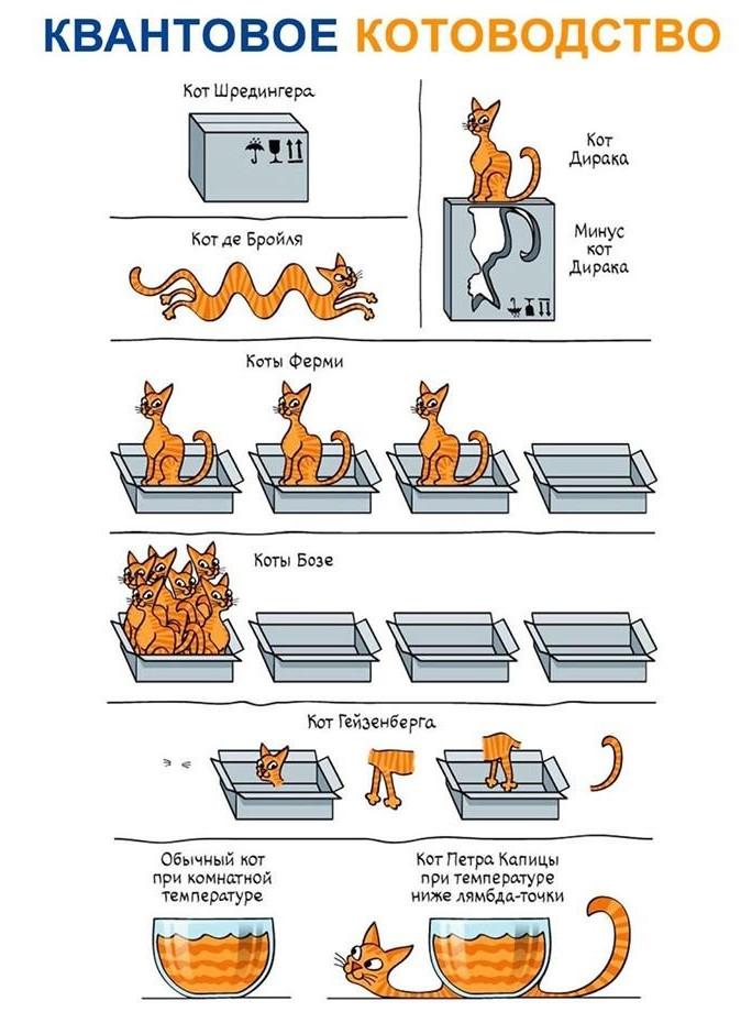 cats and quantum mechanics
