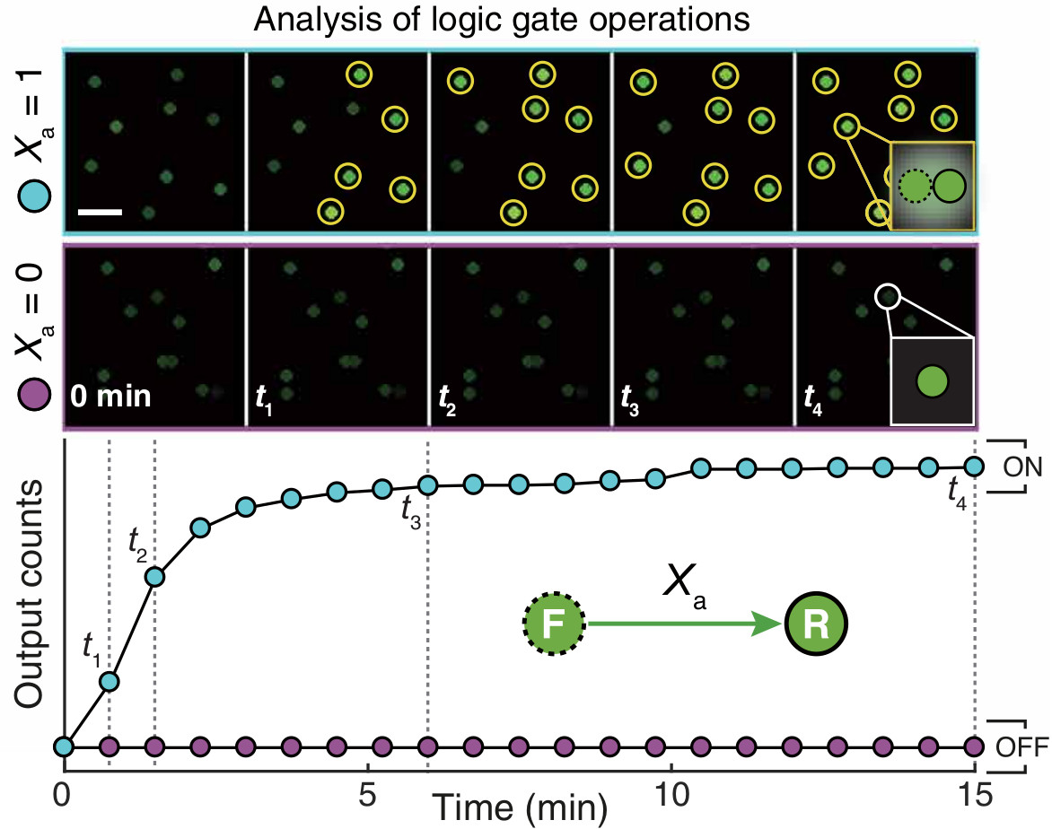 kinetics of the nanoparticle logic gate