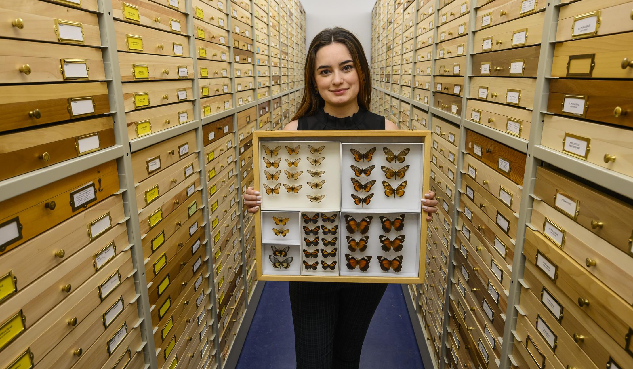 Ана Паула иколлекция бабочек.
