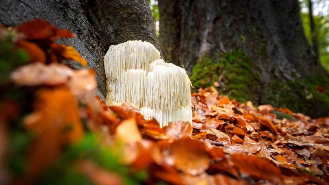 Производство заменителя кожи из грибов— гораздо проще ибезопаснее для среды, чем традиционное кожевенное.