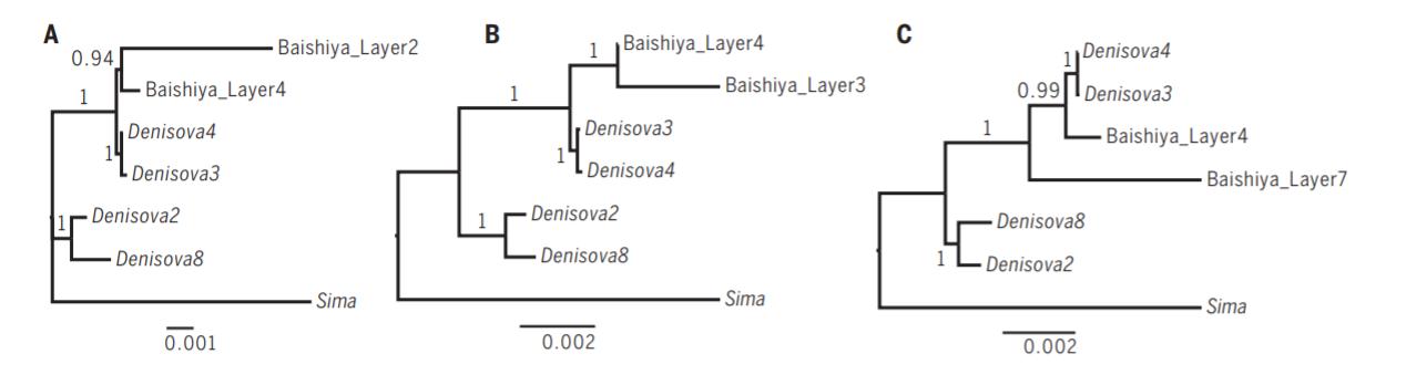 Родственные связи гоминин из отложений пещеры Байшия иденисовцев